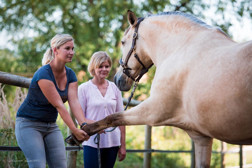 Detailaufnahme Tierphysiotherapeutin Katharina Ludwig behandelt Pferd mit Dehnungsübung an Vorderbein und Schulter