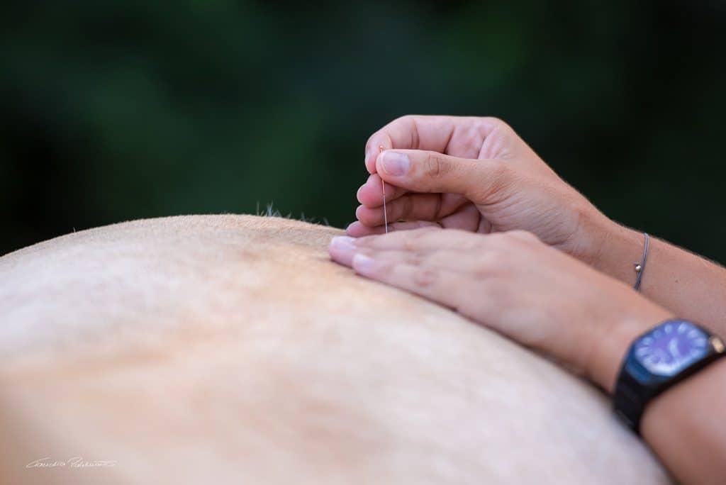 Detailaufnahme wie Tierphysiotherapeutin Katharina Ludwig Akupunkturnadel am Pferd setzt
