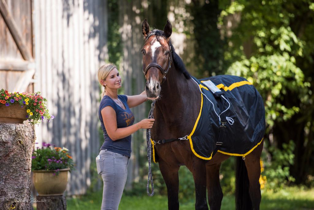 Tierphysiotherapeutin Katharina Ludwig behandelt großes braunes Pferd mit Magnetfelddecke