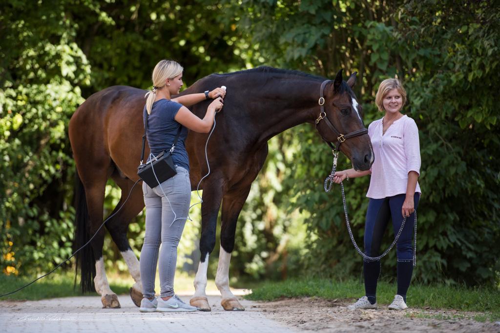 Tierphysiotherapeutin Katharina Ludwig behandelt großes braunes Pferd mit Matrix-Rhythmus-Gerät