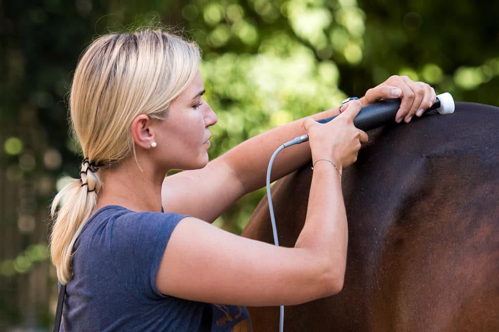 Tierphysiotherapeutin Katharina Ludwig behandelt braunes Pferd mit Matrix-Rhythmus-Gerät