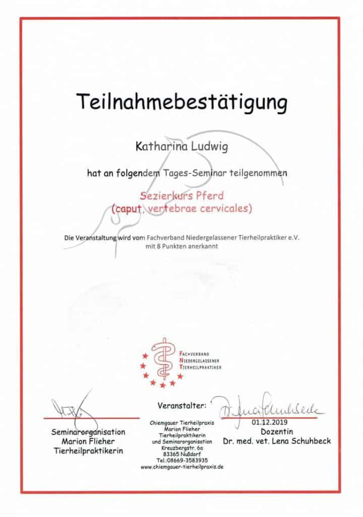 Zertifikat Sezierkurs Pferd vom Fachverband Niedergelassene Tierheilpraktiker