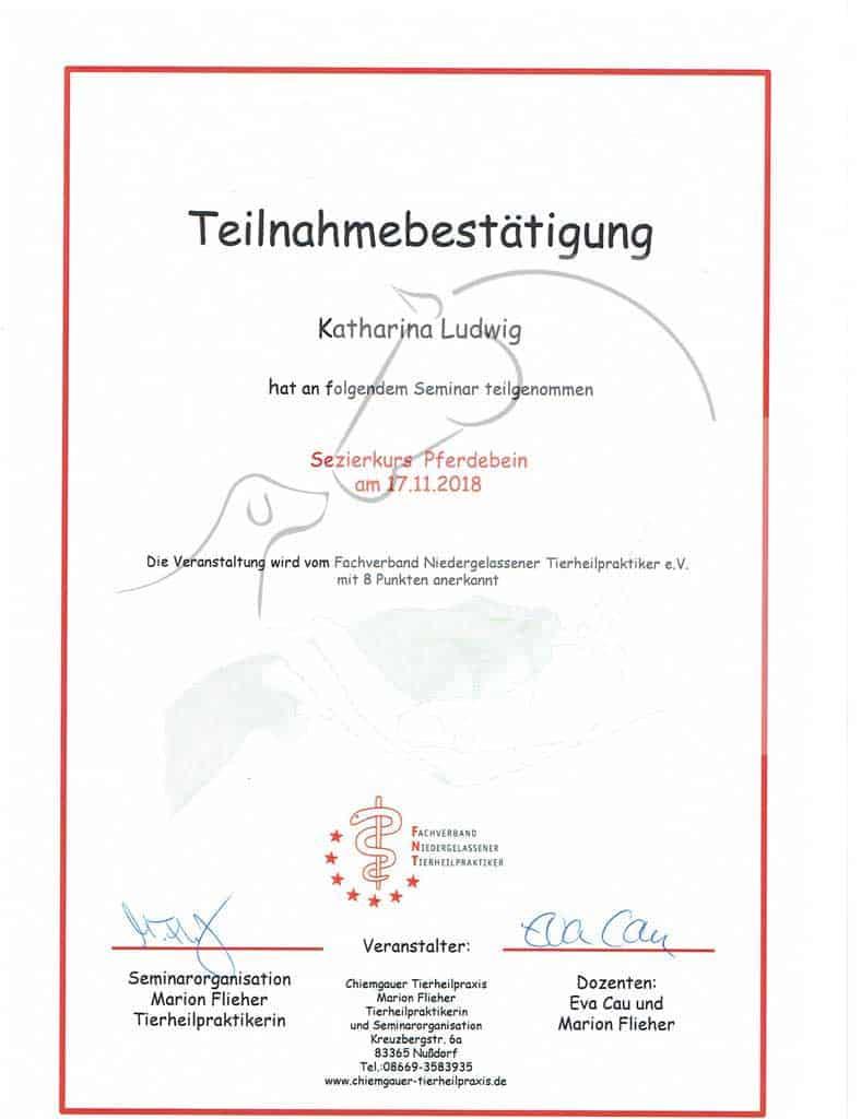 Zertifikat Sezierkurs Pferdebein vom Fachverband Niedergelassene Tierheilpraktiker